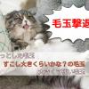 猫カフェスタッフがやっている3タイプの毛玉の取り方と予防法。