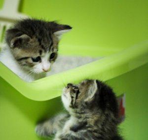 トイレに2匹の子猫