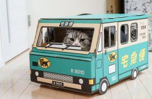 車のおもちゃで遊ぶ猫