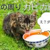 口の周りがカピカピ!!子猫の口周りを優しくケアする3ポイント