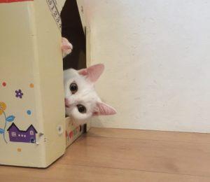 かくれんぼする猫