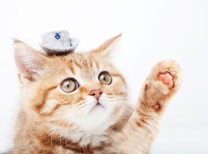 手あげ子猫