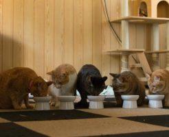 ご飯を食べている猫たち