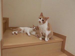 二匹の猫-6