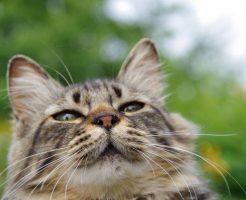 眩しそうな顔の猫