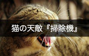猫の天敵掃除機