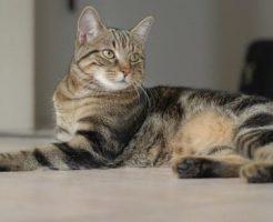 横を見る猫