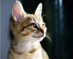 よそ見する猫