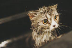 濡れてる猫
