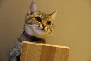 木の板を持つ猫