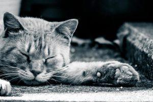 うつぶせの猫