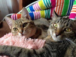 二匹の猫2