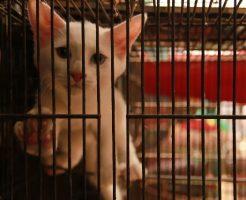 籠の中の子猫