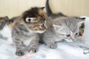二匹の猫ー4