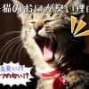 子猫のお口が臭い!!口臭の原因と予防法とは??
