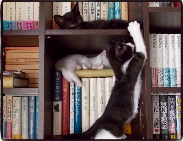 本棚で爪研ぎする子猫
