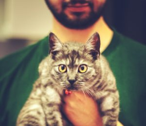 医者に抱かれる猫