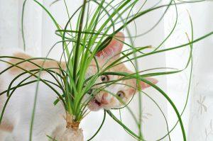 カジカジ猫