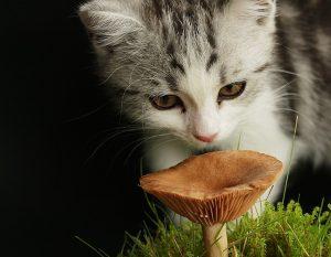 猫草と子猫