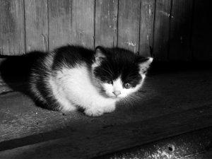 人見知り子猫