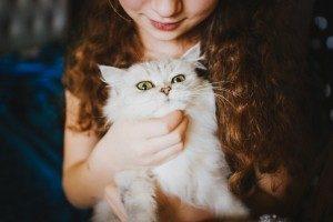 抱っこされている白い猫