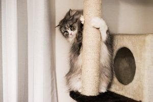キャットタワーと猫-1