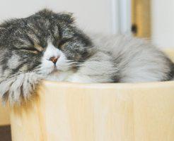 桶で眠る猫