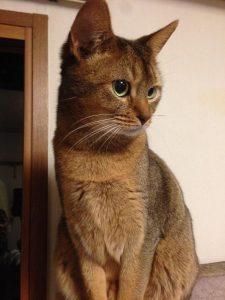 茶色の猫ー1
