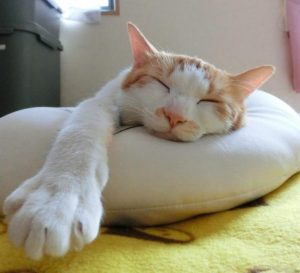 手を伸ばして寝る猫