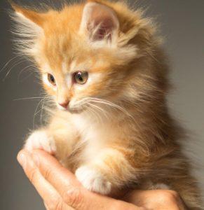 手で抱き上げられている猫