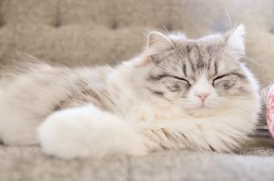 眠っている灰色の猫