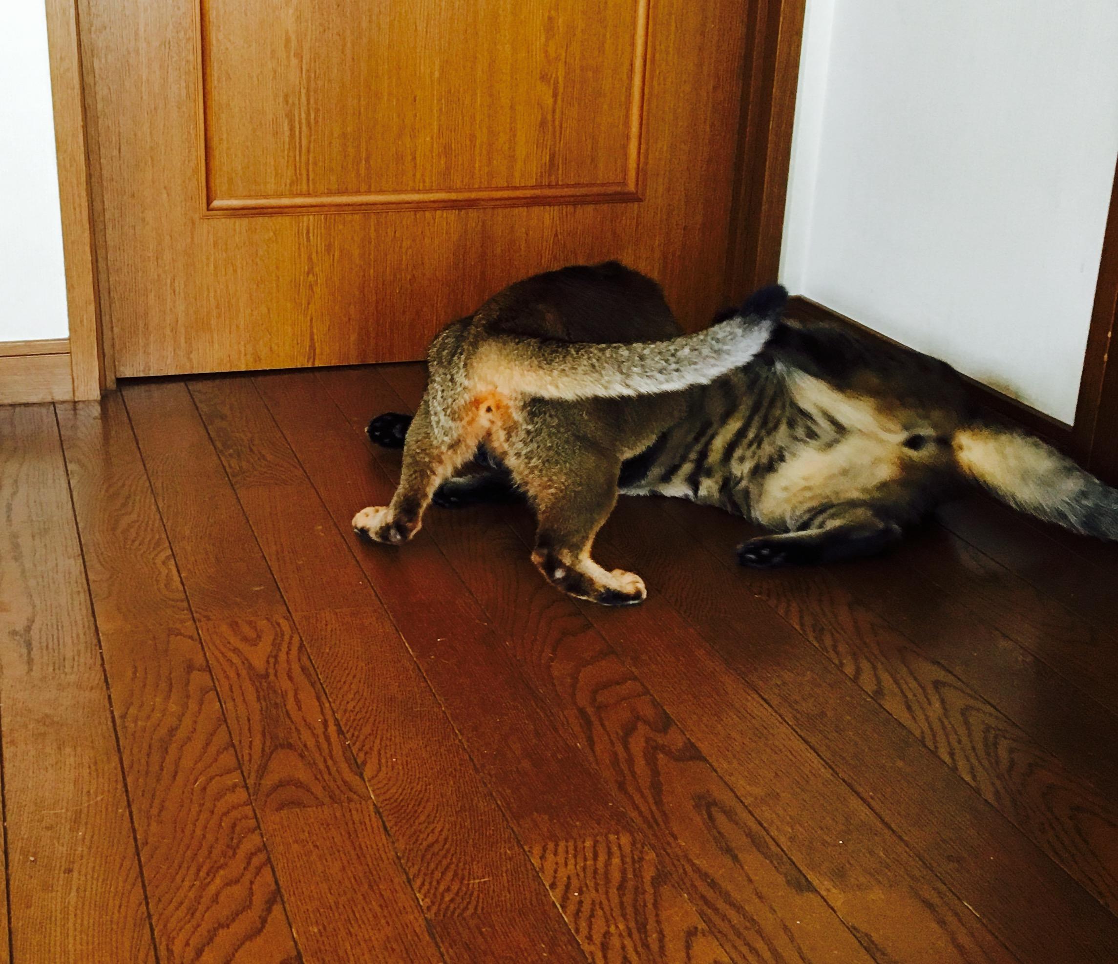 猫ご飯11日目-おまけ1