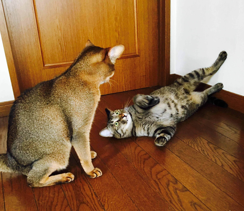 猫ご飯11日目-おまけ2