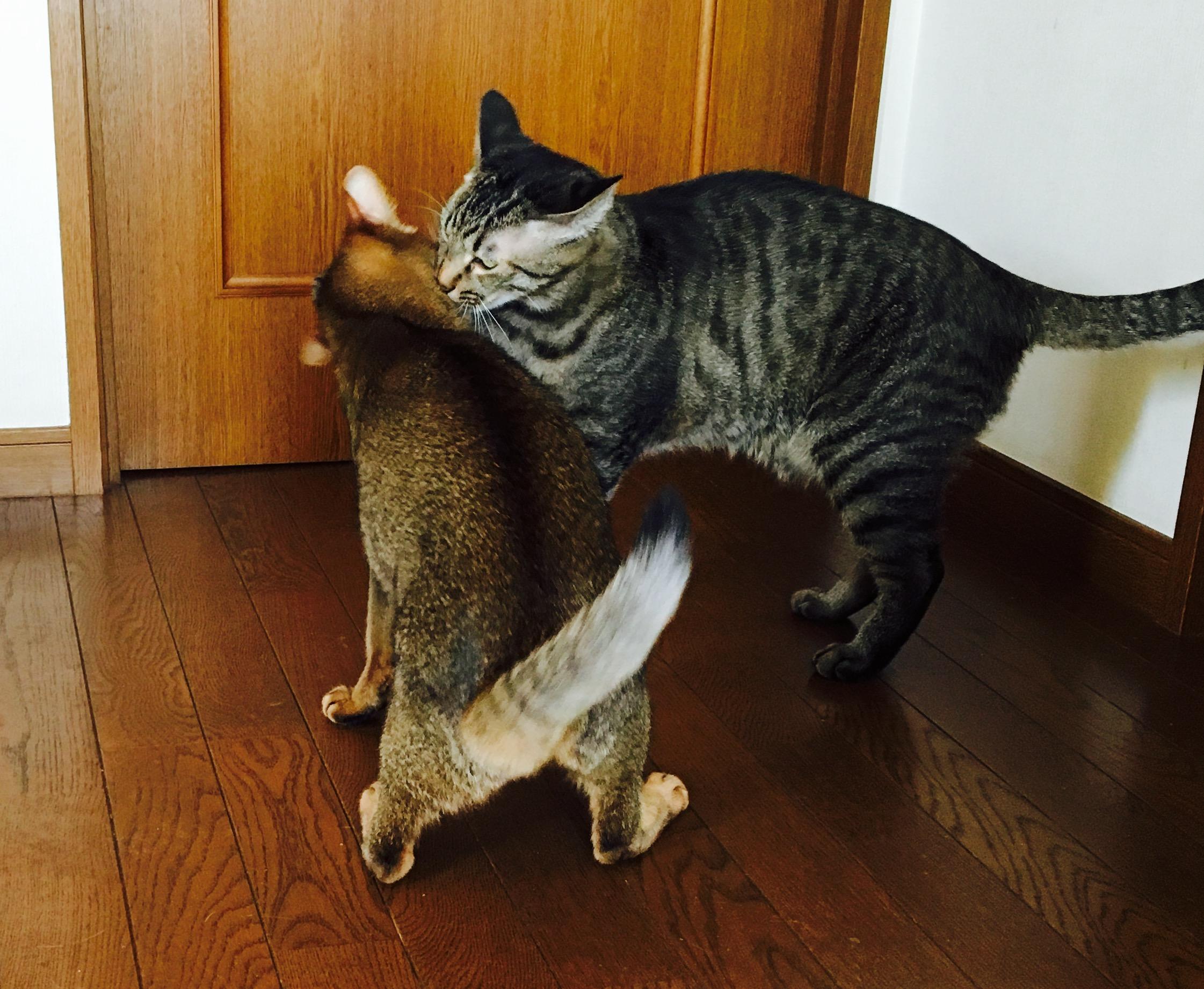 猫ご飯11日目-おまけ4