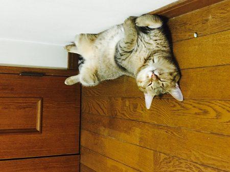 猫ご飯12日目-おまけ1