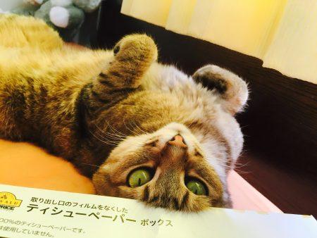 猫ご飯12日目-おまけ5
