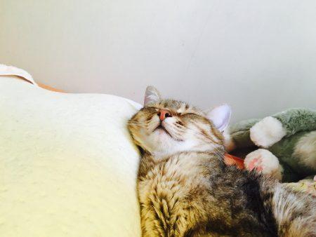 猫ご飯12日目-おまけ6
