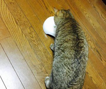 猫ご飯15日目-7