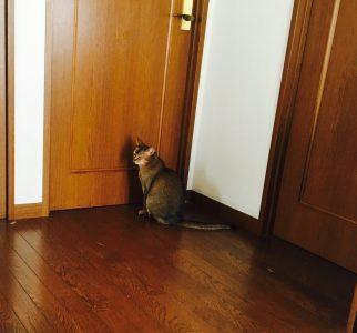 猫ご飯15日目-おまけ1