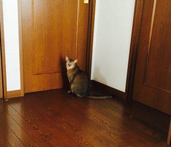 猫ご飯15日目-おまけ2