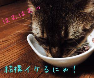 猫ご飯6日目-2
