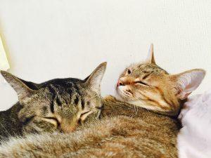 猫ご飯6日目おまけ1