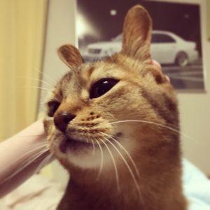 猫ご飯8日目-おまけ1