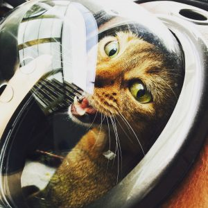 猫ご飯9日目-おまけ1