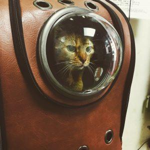 猫ご飯9日目-おまけ2