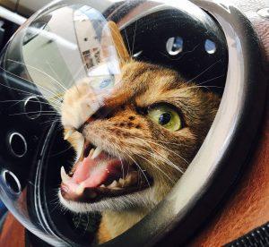 猫ご飯9日目-おまけ3