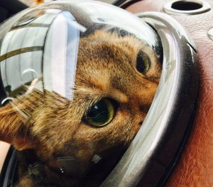 猫ご飯9日目-おまけ4