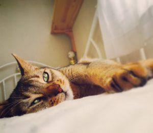 猫ご飯4日目おまけ1