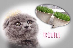 猫草トラブル