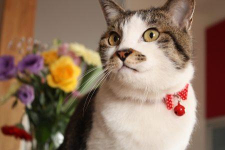 鈴を付けた猫と花